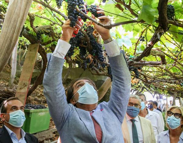 Governo Regional assegura escoamento total da uva
