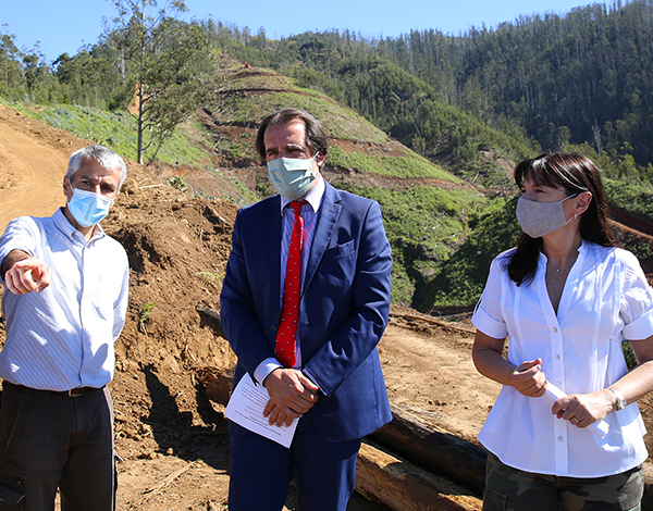 Governo Regional expande floresta Laurissilva