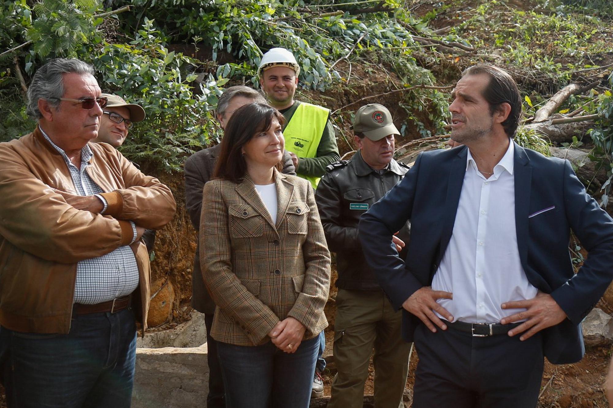 Governo já limpou 350 hectares de terrenos florestais