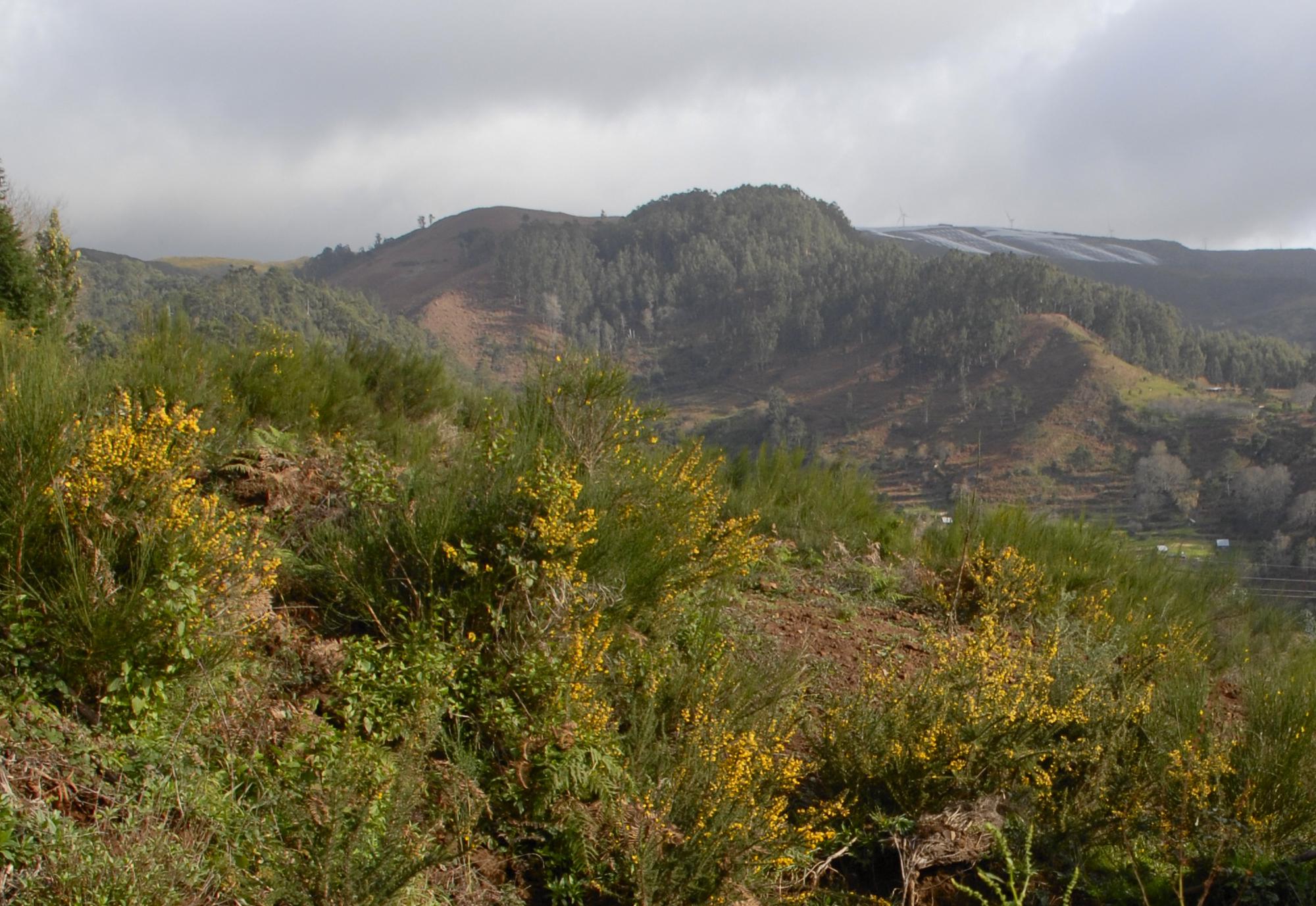 Consulta Pública: Projeto de Sobreequipamento ENEREEM- Parque Eólico do Loiral III, Paul da Serra