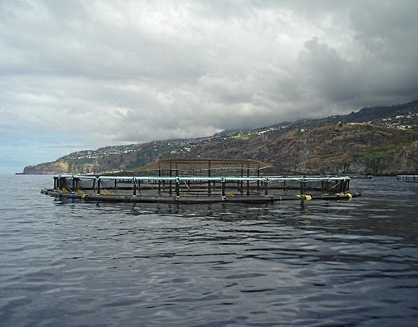 Consulta Pública: Ampliação da Piscicultura Flutuante Offshore da Ribeira Brava