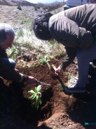 Plantação de árvores nas serras da Madeira