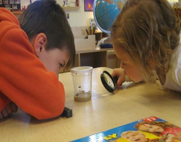 Aprendizagem por Projetos na Educação de Infância