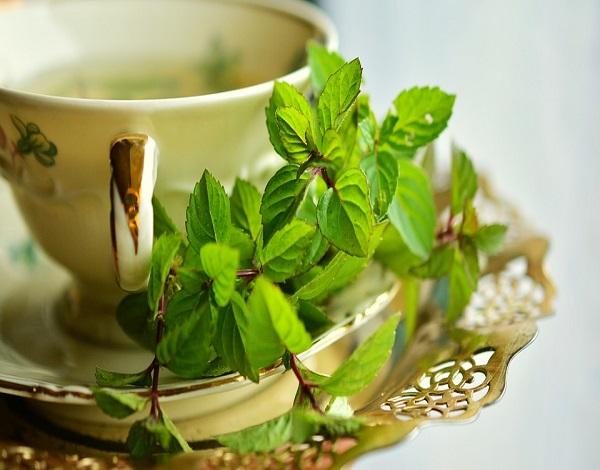 Abertura de inscrições - Plantas Aromáticas e Ervas Medicinais