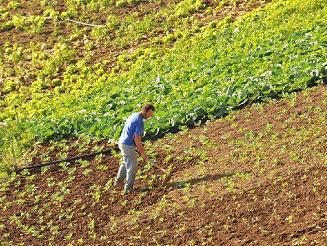 Mais quase 5 milhões de euros para os agricultores da RAM