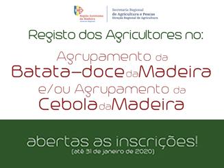 """Abertas as inscrições para os Agrupamentos de Produtores da """"Batata-doce da Madeira"""" e da """"Cebola da Madeira"""""""