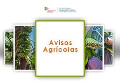 Aviso Agrícola n.º 1/2019
