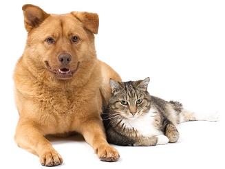 O que fazer quando o cão ou gato muda de proprietário?