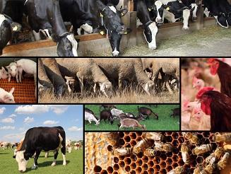 As obrigações dos produtores pecuários
