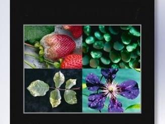 Direção Regional de Agricultura e Universidade da Madeira publicam artigo em revista científica internacional