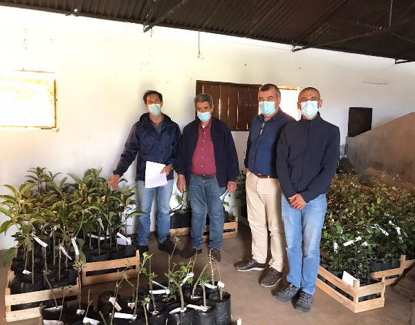 Árvores de fruto, entregues aos agricultores do Porto Santo