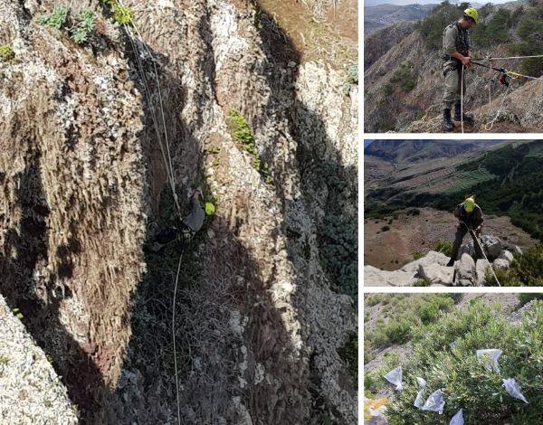 Trabalhos Técnicos Efetuados pelo corpo de Polícia Florestal na Ilha do Porto Santo