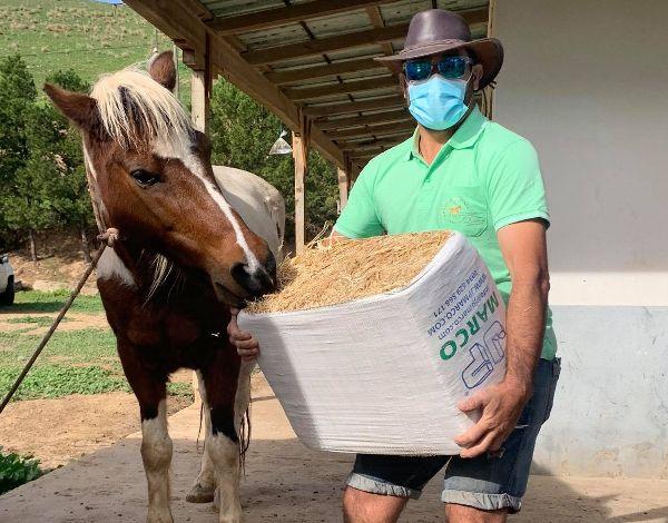 Governo Regional entrega feno no Porto Santo