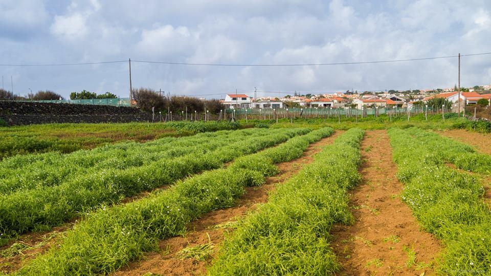 Gastronomia do Porto Santo com nova aposta
