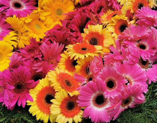 Festa da Flor e do Vinho Madeira mantém tradição dos tapetes florais