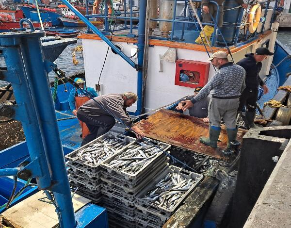 Isenção do pagamento de taxas nas lotas e entrepostos frigoríficos estende-se até junho e totaliza 750 mil euros