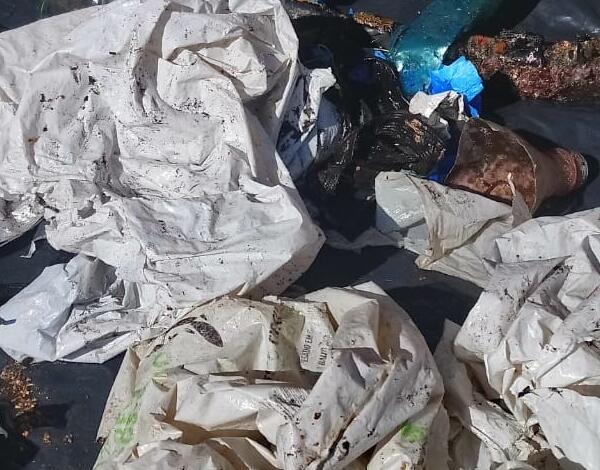 Direção regional do Mar recolhe lixo marinho