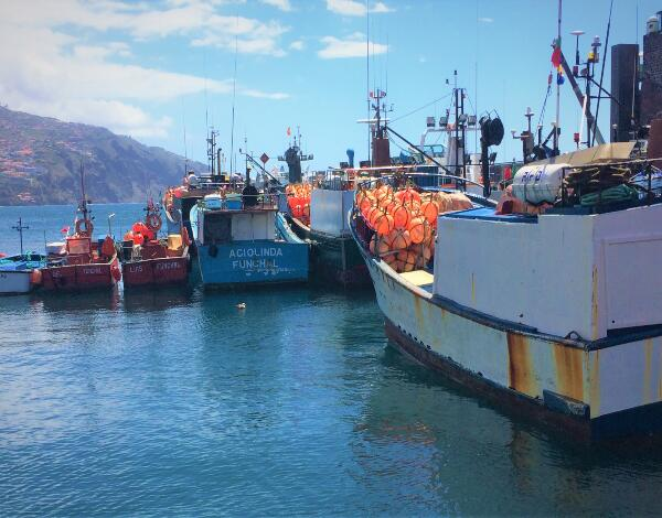 Apoio financeiro de compensação aos apanhadores, pescadores e armadores da Região. Minutas dos contratos já estão disponíveis