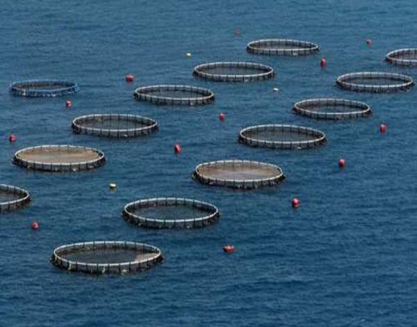 """A Madeira não pode desperdiçar as condições """"excepcionais"""" para desenvolver a aquacultura"""