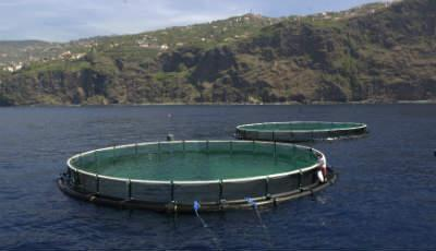 Valor da dourada produzida em aquacultura atinge recorde em 2019