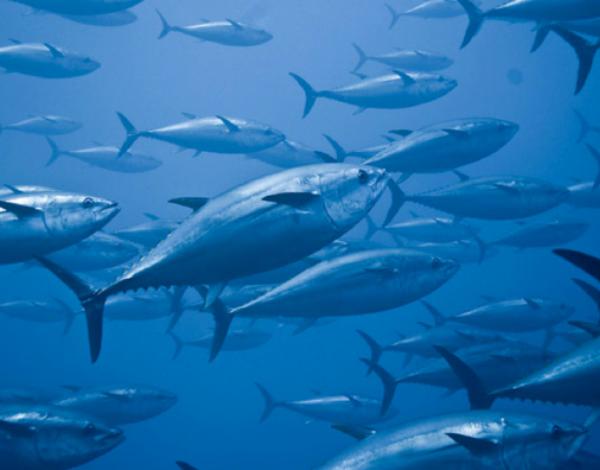 Madeira já conhece quotas para 2020