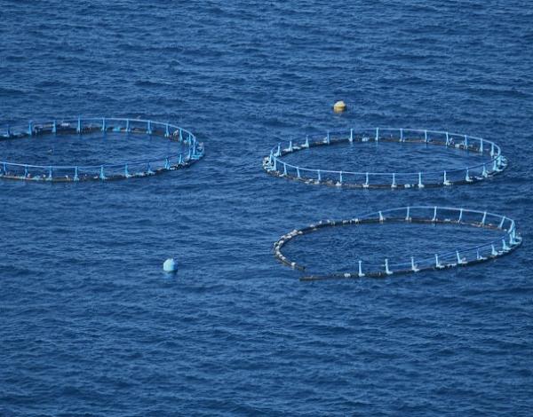 Secretaria de Mar e Pescas esclarece declarações públicas da plataforma AZIA
