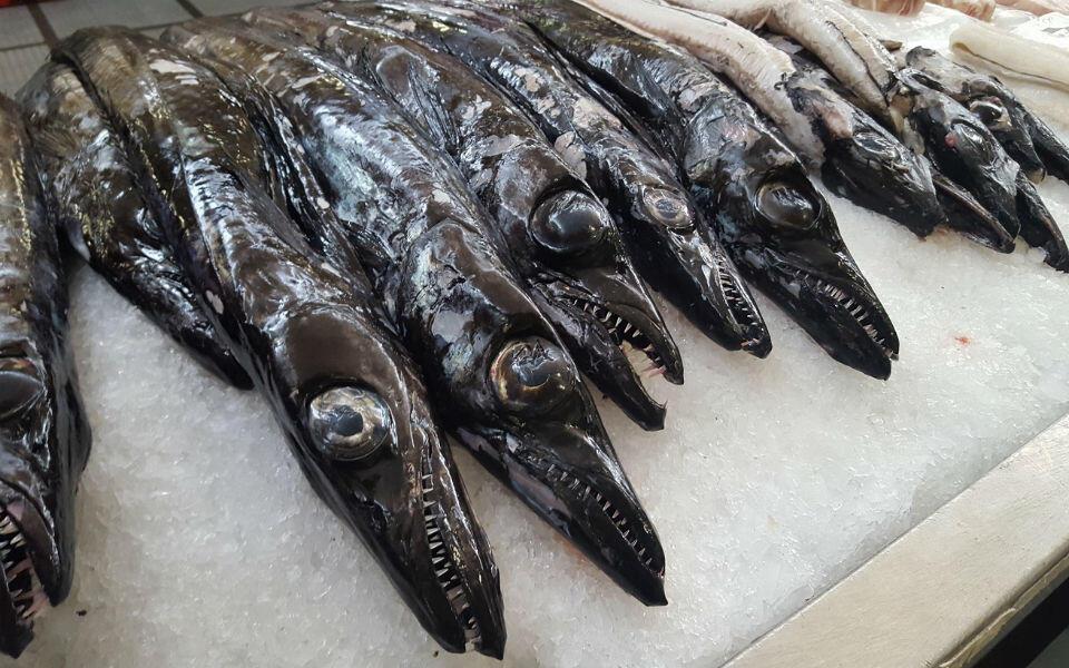 Recorde de pescado descarregado em lota em 2019