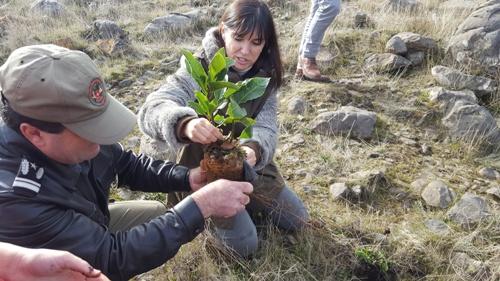 5 mil árvores plantadas no Chão das Galinhas em São Roque