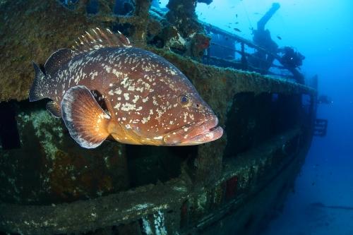 Madeira acolhe convenção internacional para a biodiversidade