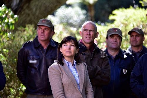 Secretaria do Ambiente planeia reflorestar 400 hectares neste ano