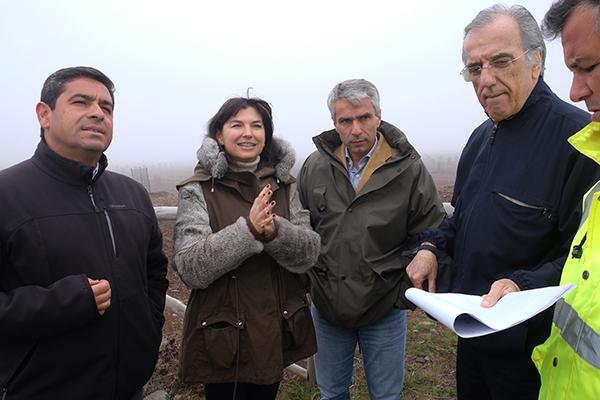23 mil plantas recuperam Paul da Serra