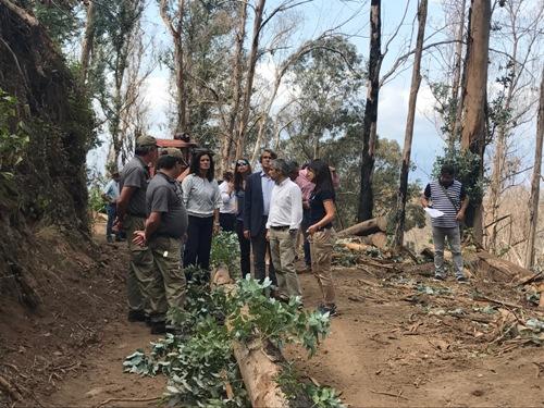 Governo já limpou 35 hectares de terreno ardido no Funchal