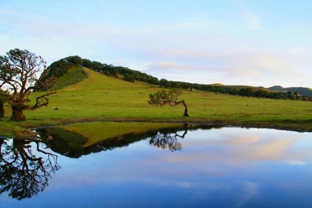 Ambiente apresentou 2º Inventário Florestal da Madeira