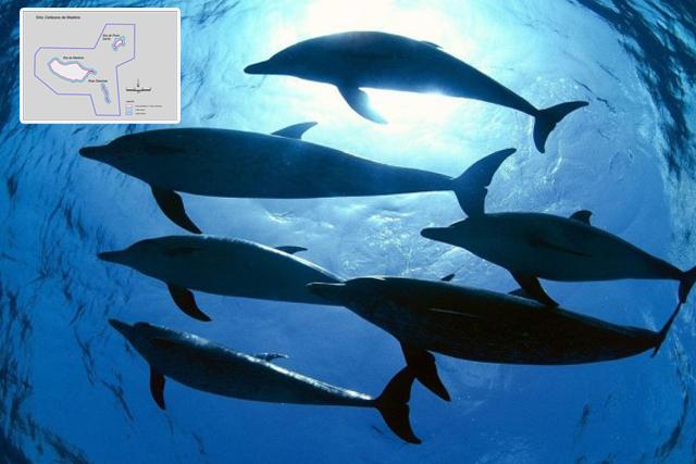 Governo cria área de proteção para cetáceos