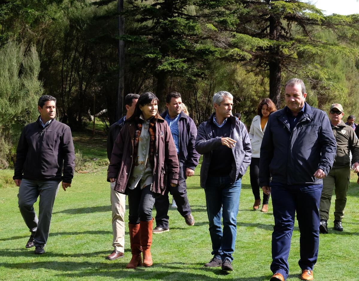 IFCN providencia poda de árvores em espaços verdes