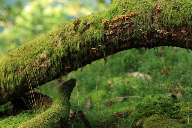 Ambiente promove utilização racional dos recursos naturais em época festiva