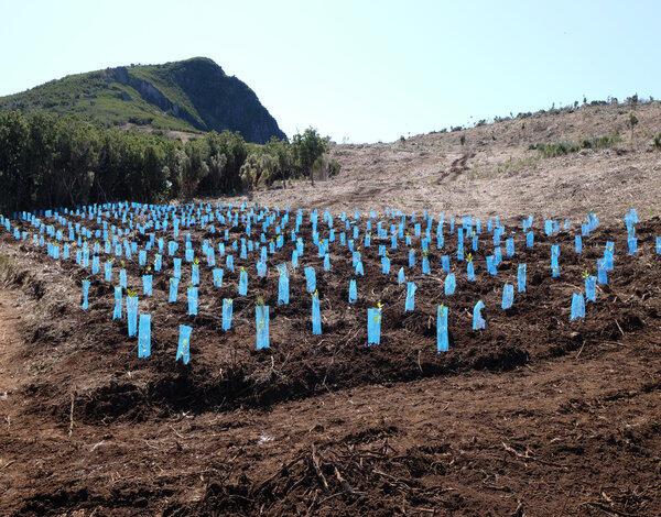 Mais de 110 mil árvores plantadas nas serras da Madeira