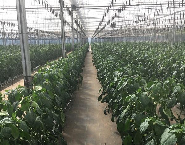 Governo adianta 3,3 milhões para financiar investimentos agrícolas