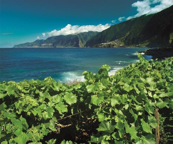 Prescritores franceses em visita à Região Demarcada da Madeira
