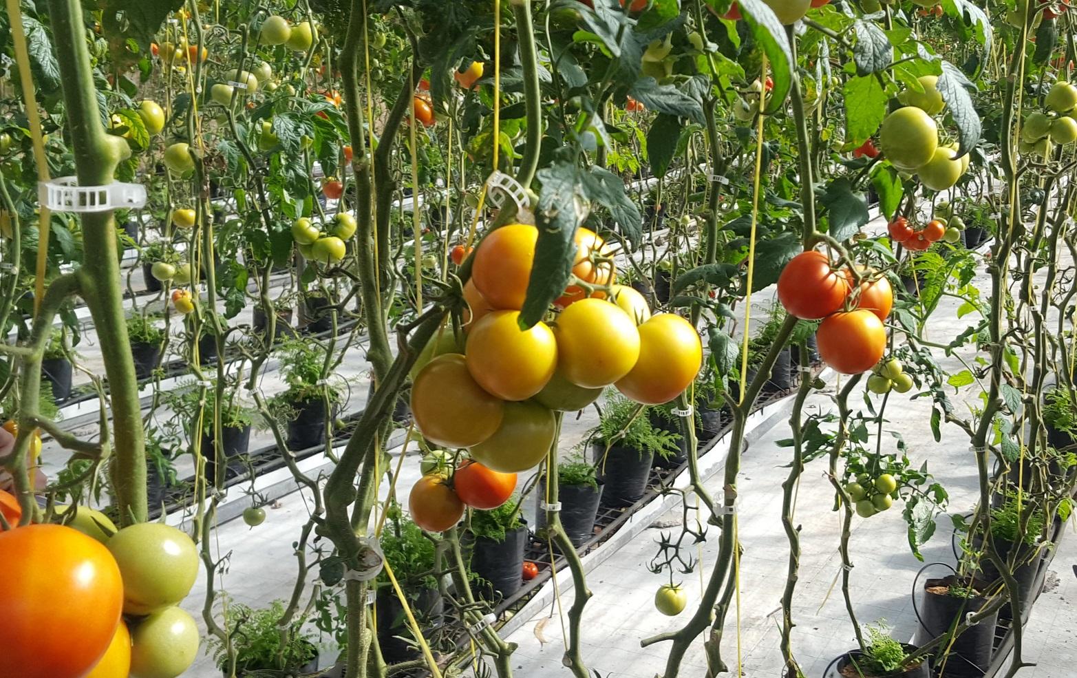 Curso de Agricultura Biológica na UMa com equivalência a Jovem Agricultor