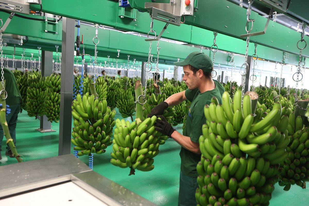 GESBA vital para o sector da Banana