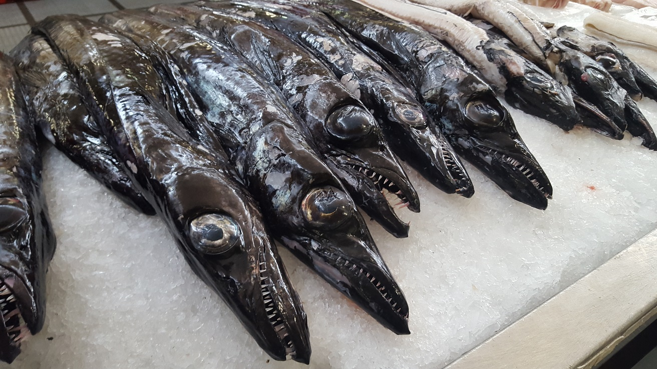 Captura de peixe-espada aumentou