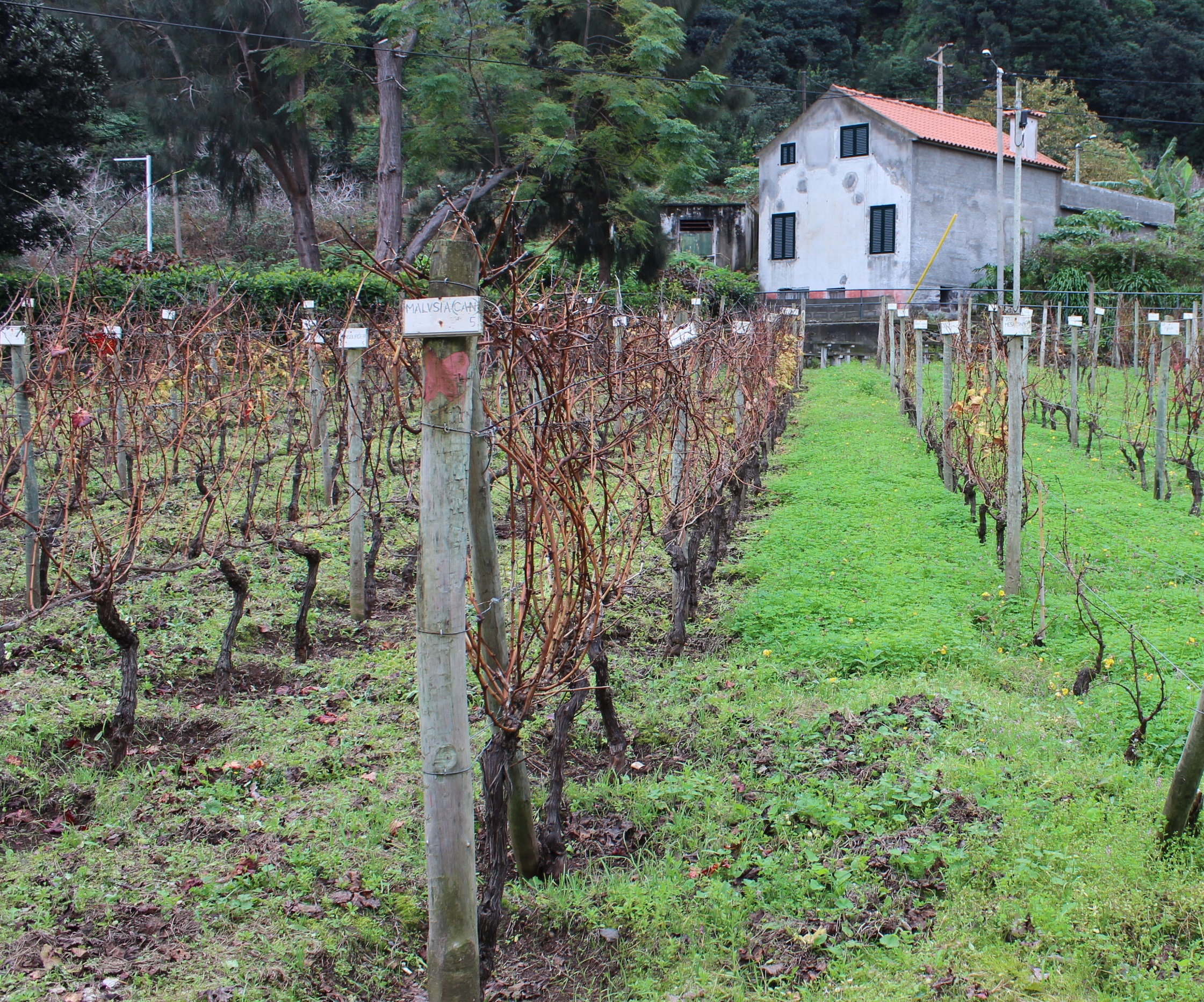 Prescritor Canadiano visita a Região Demarcada da Madeira