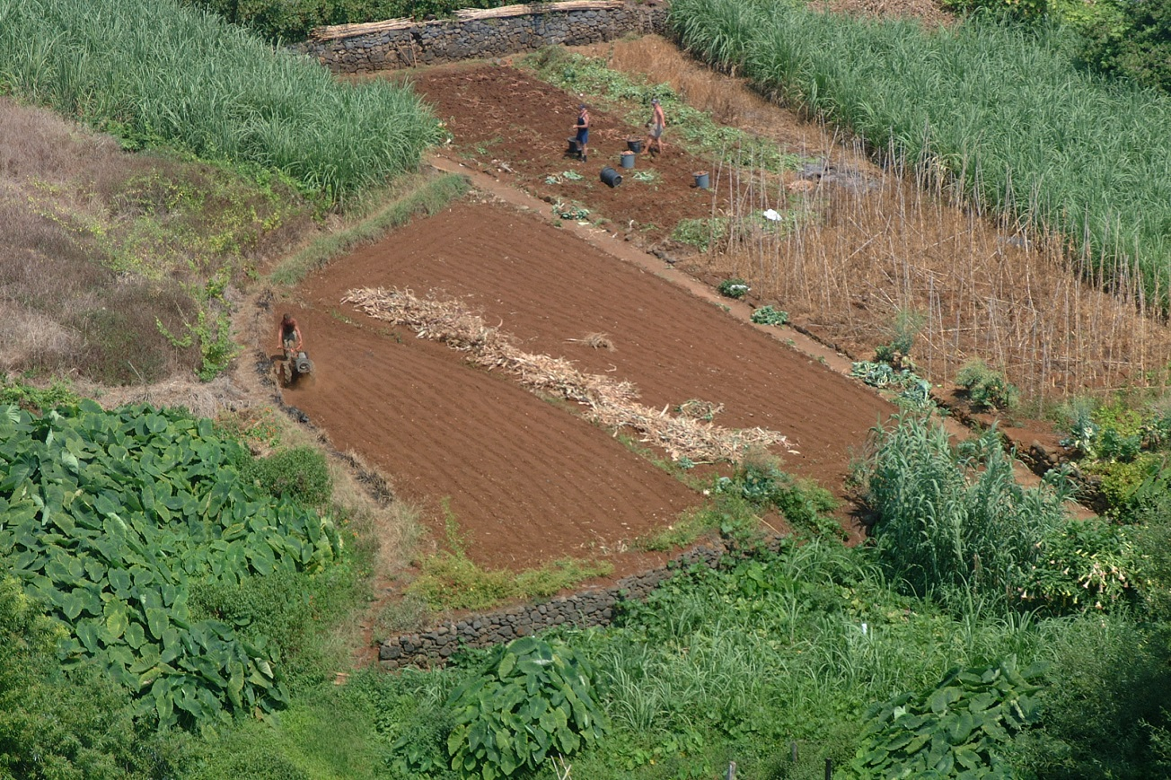 Seguros agrícolas disponíveis