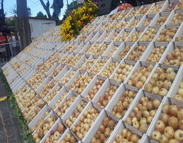 Produção de cebola deverá aumentar