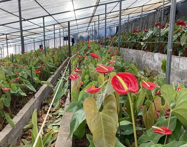 Agricultura prorroga prazo de candidaturas a apoios de 3 milhões de euros a fundo perdido