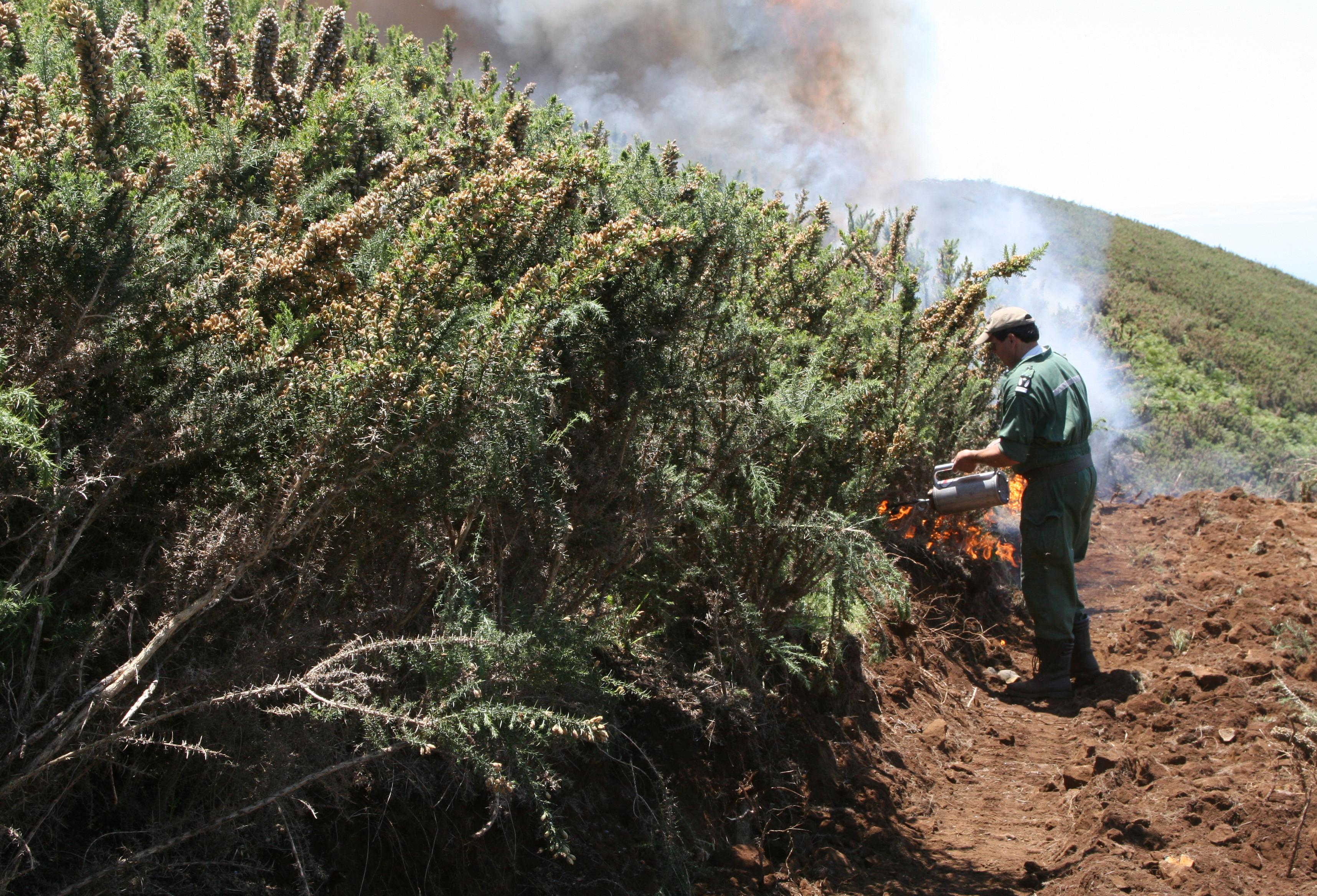 Ambiente promove queimadas controladas para diminuir risco de incêndios florestais